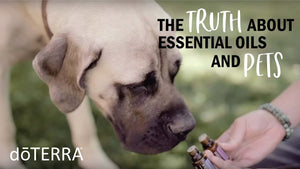 Truths and Myths about Essential Oils and Pets