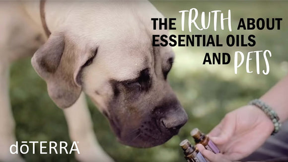 Truths and Myths about Essential Oils and Pets - doTERRA