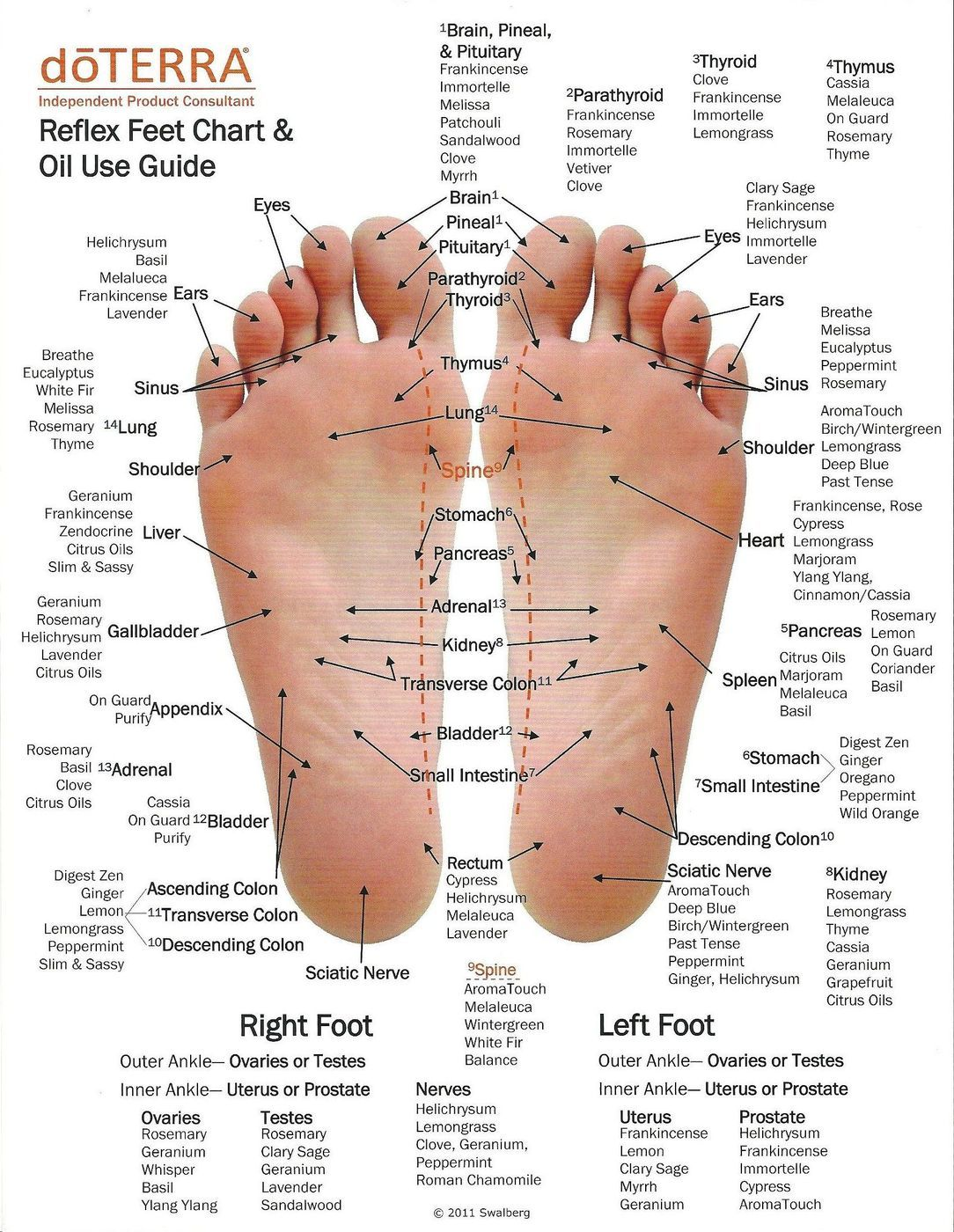 Why Putting Essential Oils On The Bottom Of Your Feet Works