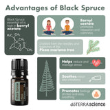 doTERRA Black Spruce Infographic