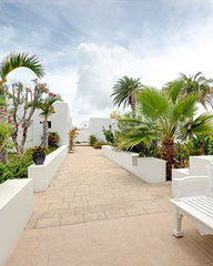 Impact Group Retreat, paved walkway with white bench and lined with palm trees.