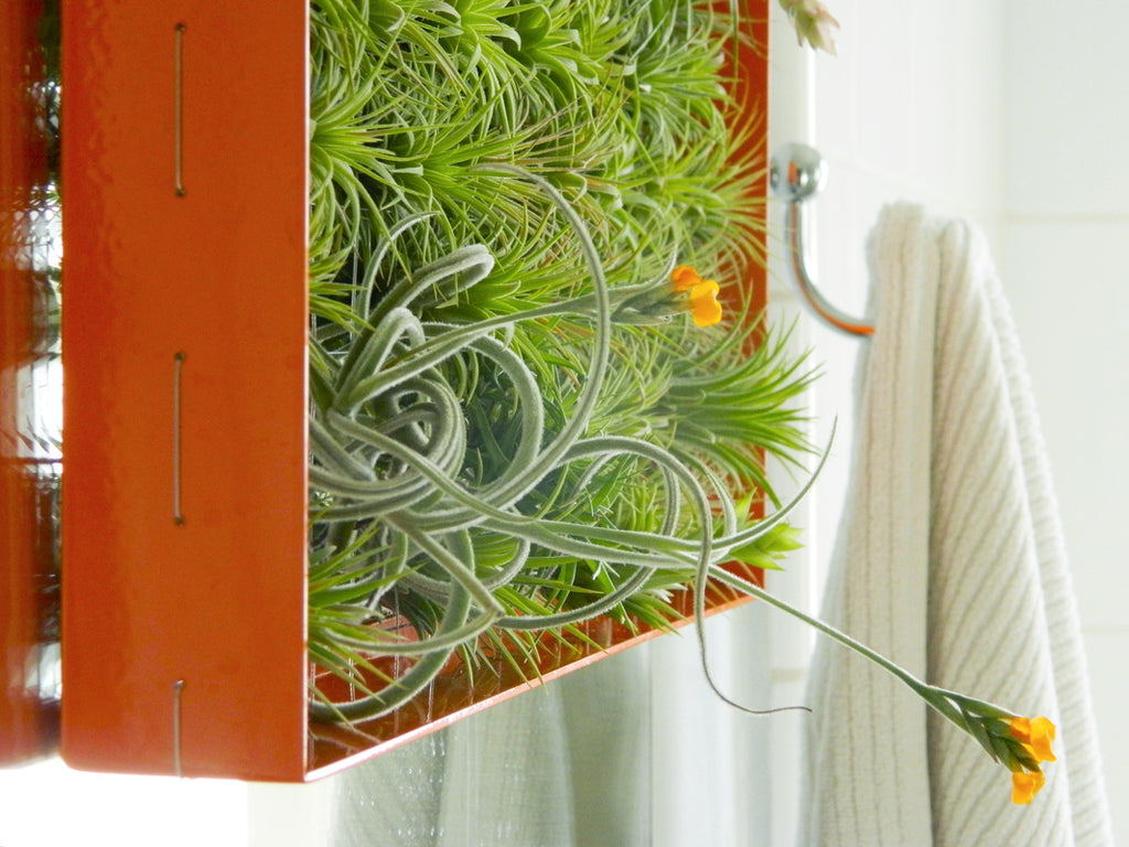 orange-airplant-box
