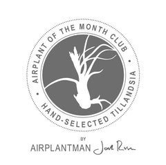 Airplants of the month club (4 months)