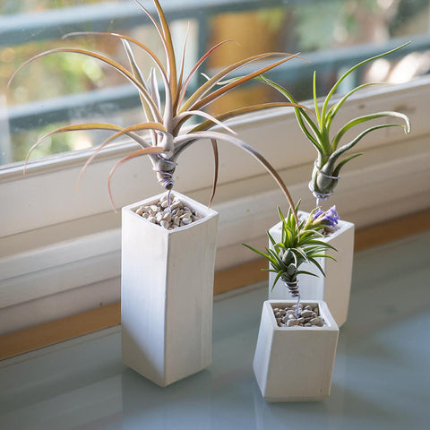 Ceramic Air Plant Vessel Holder by Airplantman