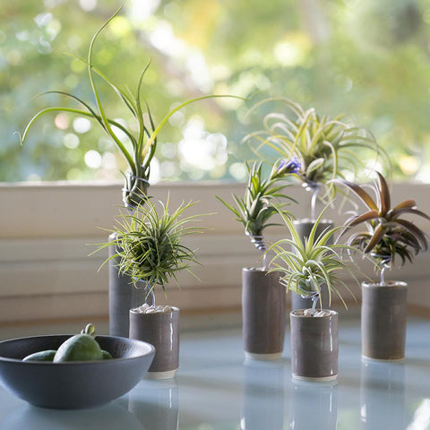 Airplant Vessel Glazed Ceramic