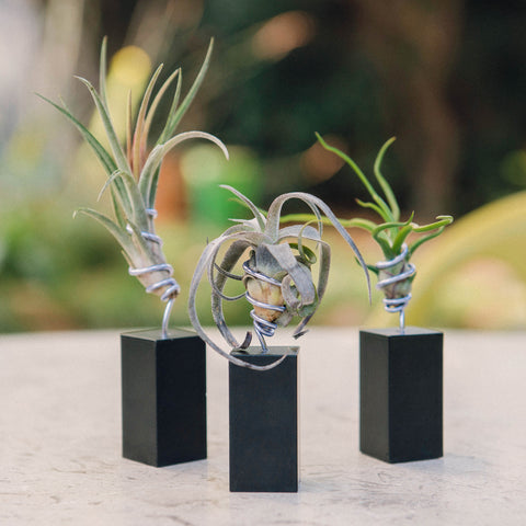Airplant Vessel Mini