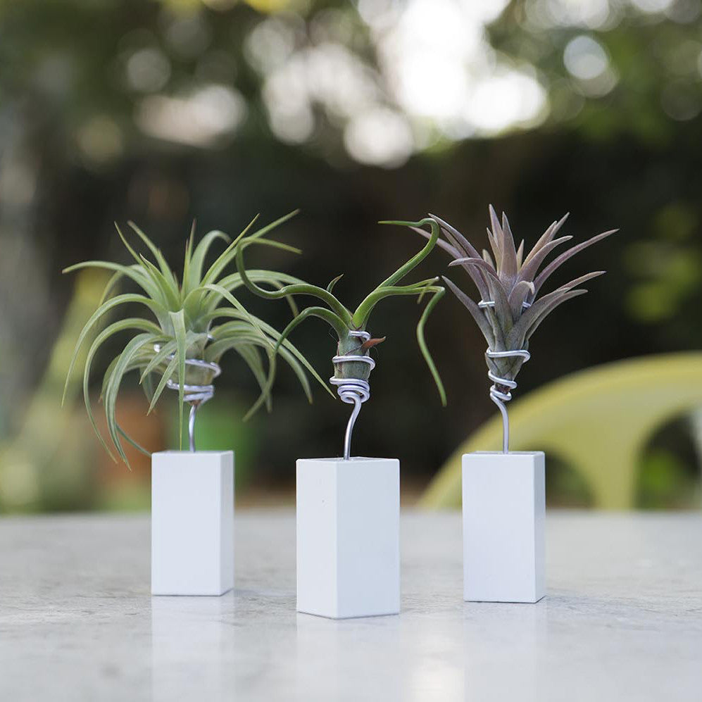 Air Plant Mini Holder Vessel by Airplantman