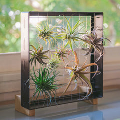 Air Plant Frame Stand Feet