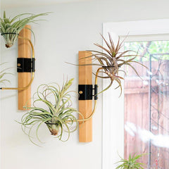 airplantman swing arm clamp tillandsia holder decor design