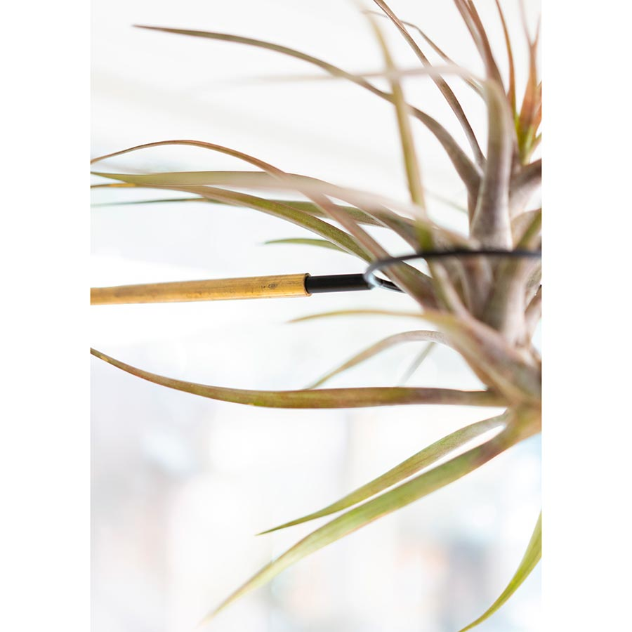 airplant display holder swing arm clamp interior design plant brass and black steel wood