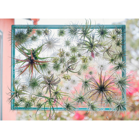 Air Plant Frame - Large