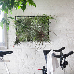 Airplantman Air Plant Frame