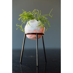 airplantman kokedama wool felt handmade rhipsalis design decor