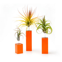 Air Plant Vessel - Steel