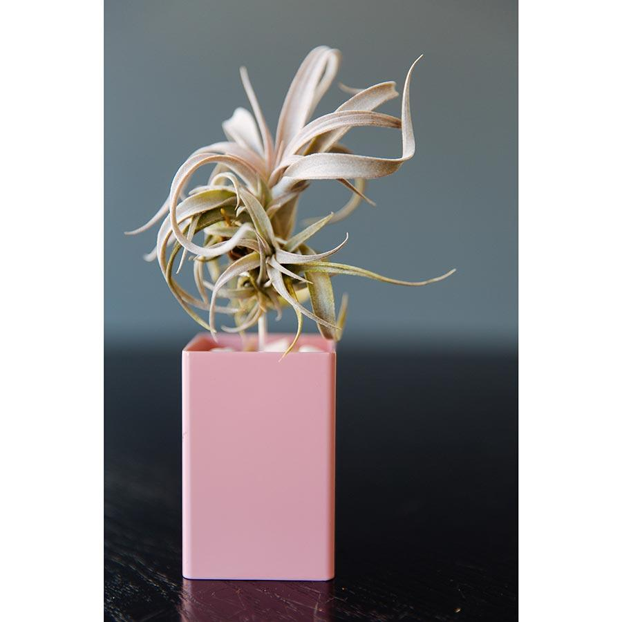 Air Plant Vessel Holder in Steel by Airplantman decor gift powder coat tillandsia