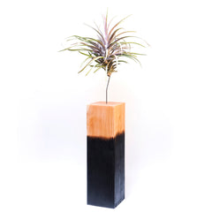 Air Plant Vessel Holder in Wood by Airplantman