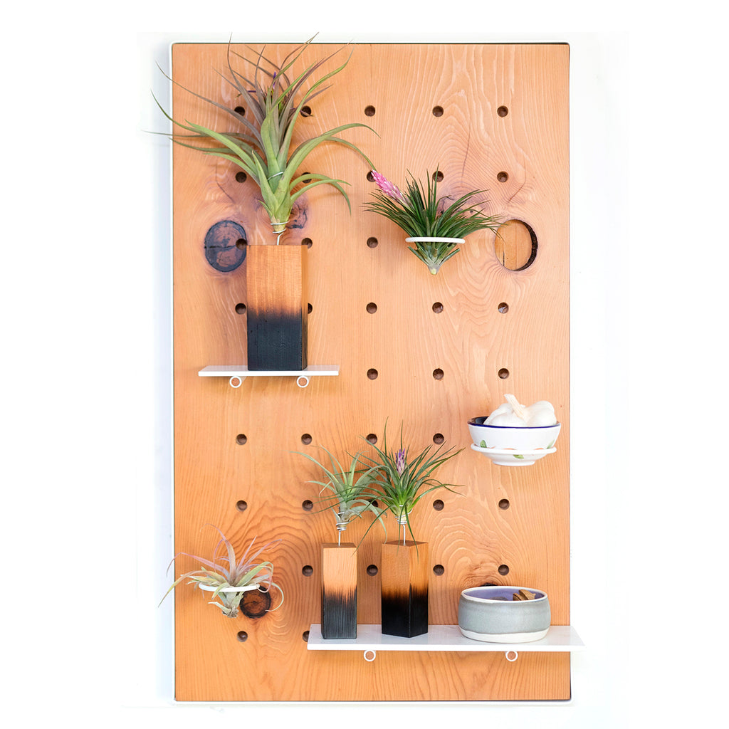 Air Plant Peg Board by Airplantman