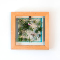 Air Plant Frame Wood Outer Frame by Airplantman