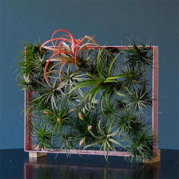 airplant air plant tillandsia frame vertical garden pink powder coated aluminum