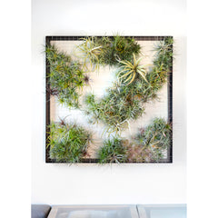 Air Plant Frame by Airplantman