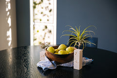 Air Plant Vessel - Stone