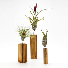 Airplant Vessel Wood