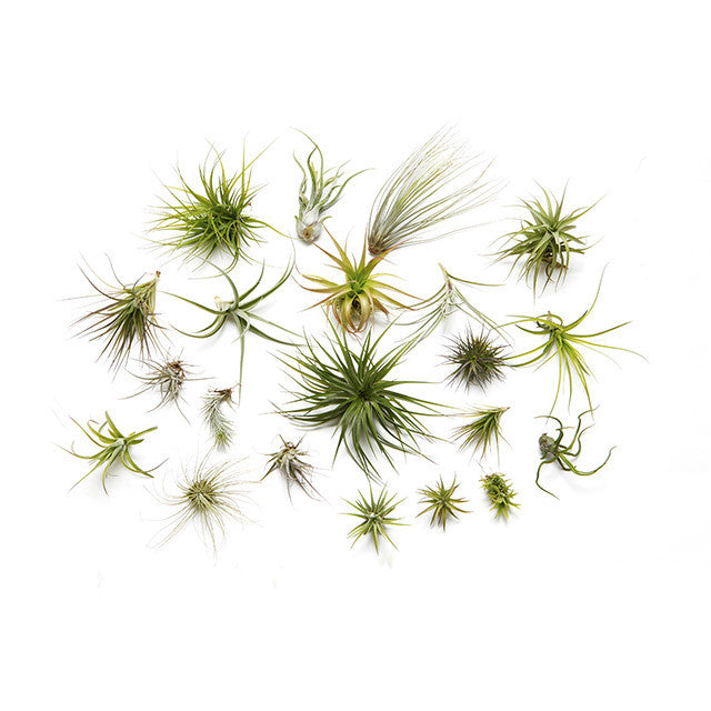 Airplant booster kit