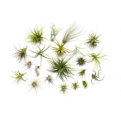 Air Plant Booster Kit