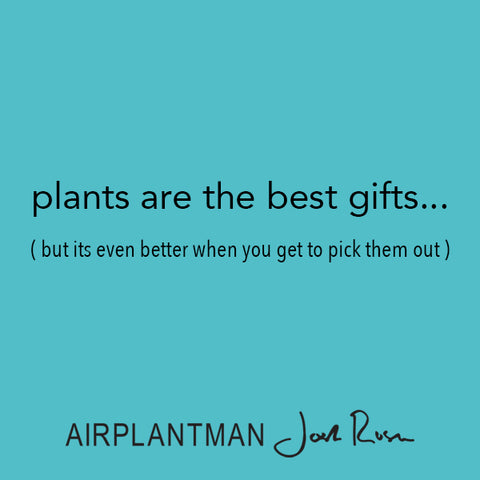 Air Plant Gift Cards