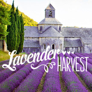 What has Lavender ever done for us?