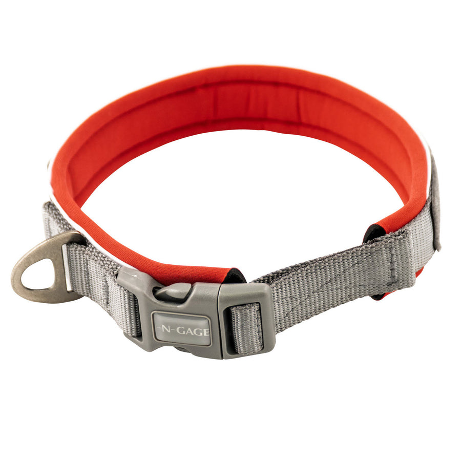 dog collar alternate angle 2