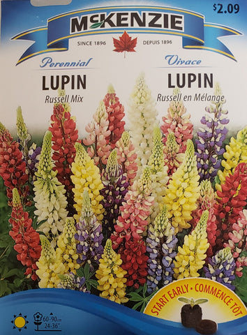 Russell Mix Lupins