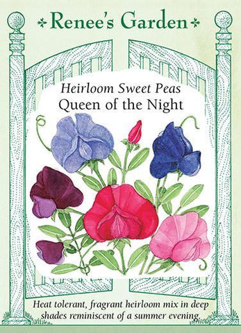 Sweet Pea Queen of the Night