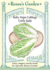 Cabbage Baby Napa Little Jade