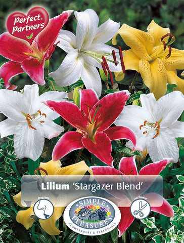 Lily Bulbs - Stargazer Mix