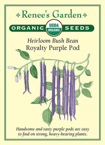 Bean Bush Royalty Purple Pod Organic