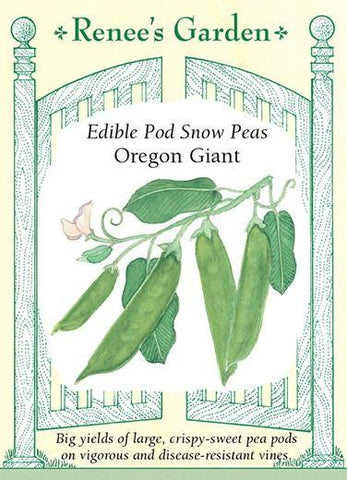 Pea Snow Oregon Giant