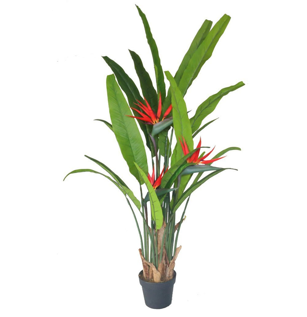 Birds of Paradise Plant 130 cm