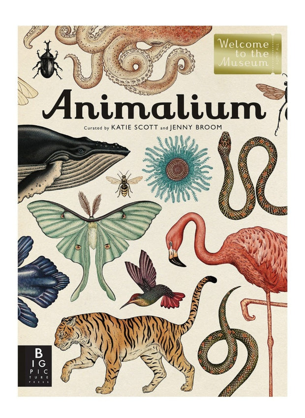 animalium animal kingdom book