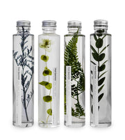 large bottled plant specimens