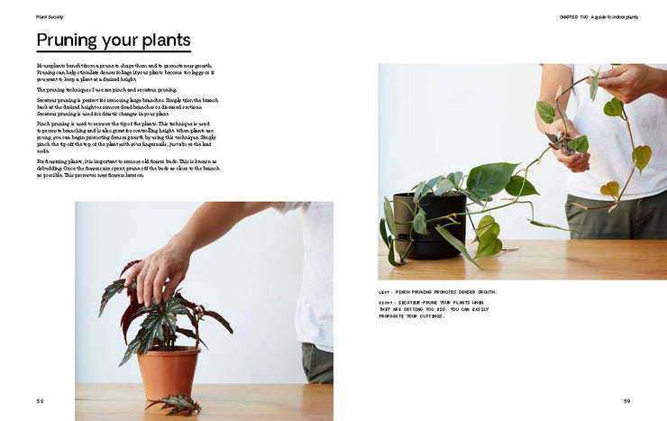 plant society: create and indoor oasis for your urban space