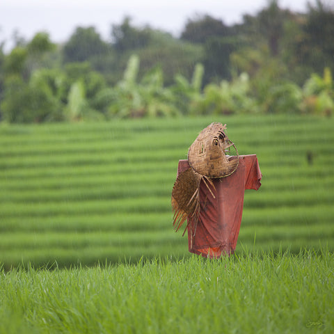 301 Scarecrow, Bali Rice Fields (Square Print)