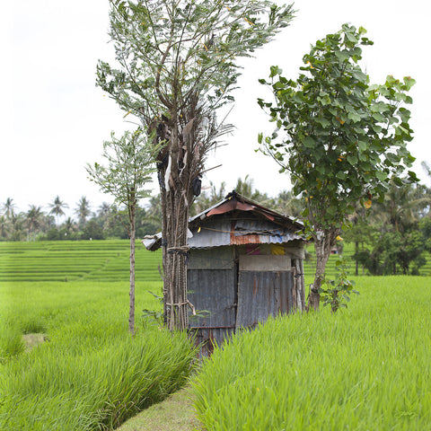 308 Rice Hut, Bali Rice Fields (Square Print)