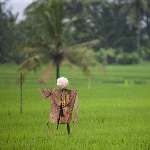 309 Scarecrow, Bali Rice Fields (Square Print)