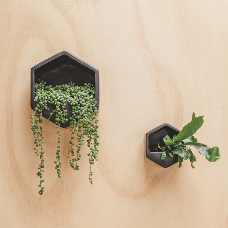 Black Hexagon Wall Planter