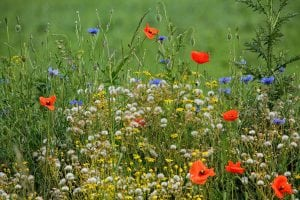 Diverse and colourful meadow @Amberoot