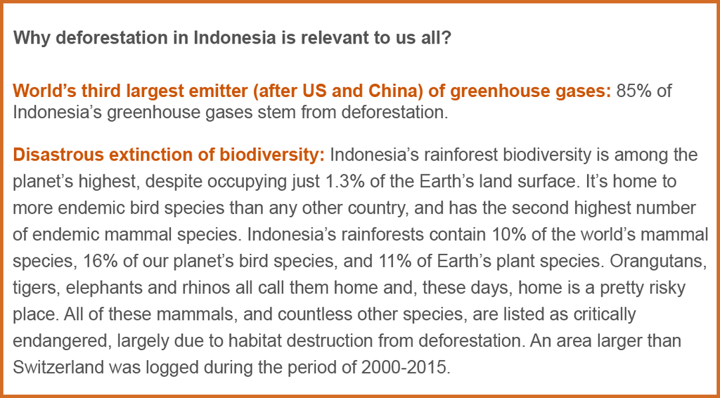 Why Deforestation in Indonesia is Relevant to us All- Deforestation and Fashion Amberoot