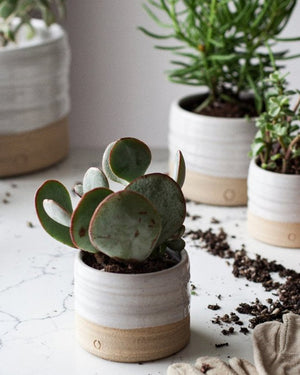 Farmhouse-Pottery-Small-Trunk-Garden-Pot