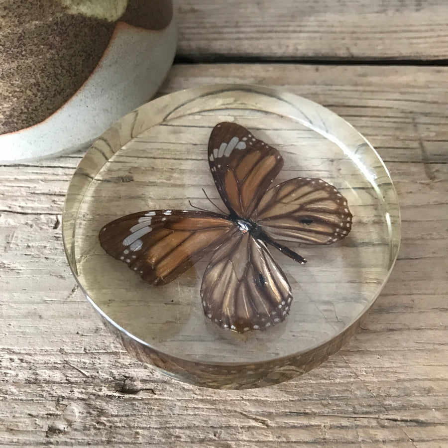 Vintage Butterfly Taxidermy Paperweight