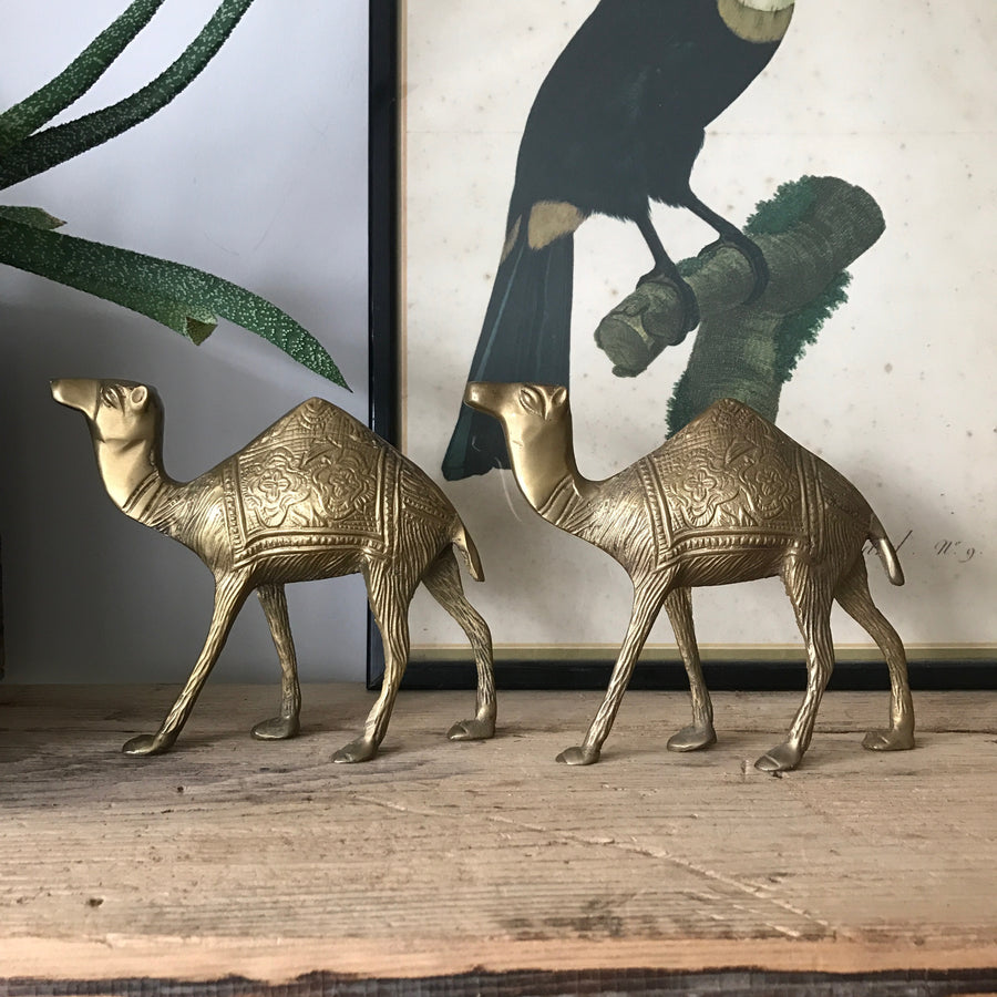 Pair of Mid Century Brass Camels
